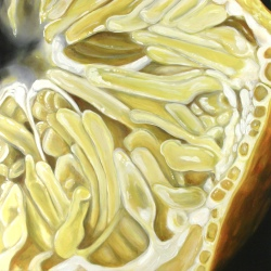 Angela Faustina, Lemon I, 2015 2016. Oil On Cradled Painting Panel, 16  By 16""