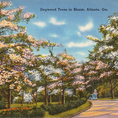 Atlanta Dogwood Festival Postcard From 1936 (400)