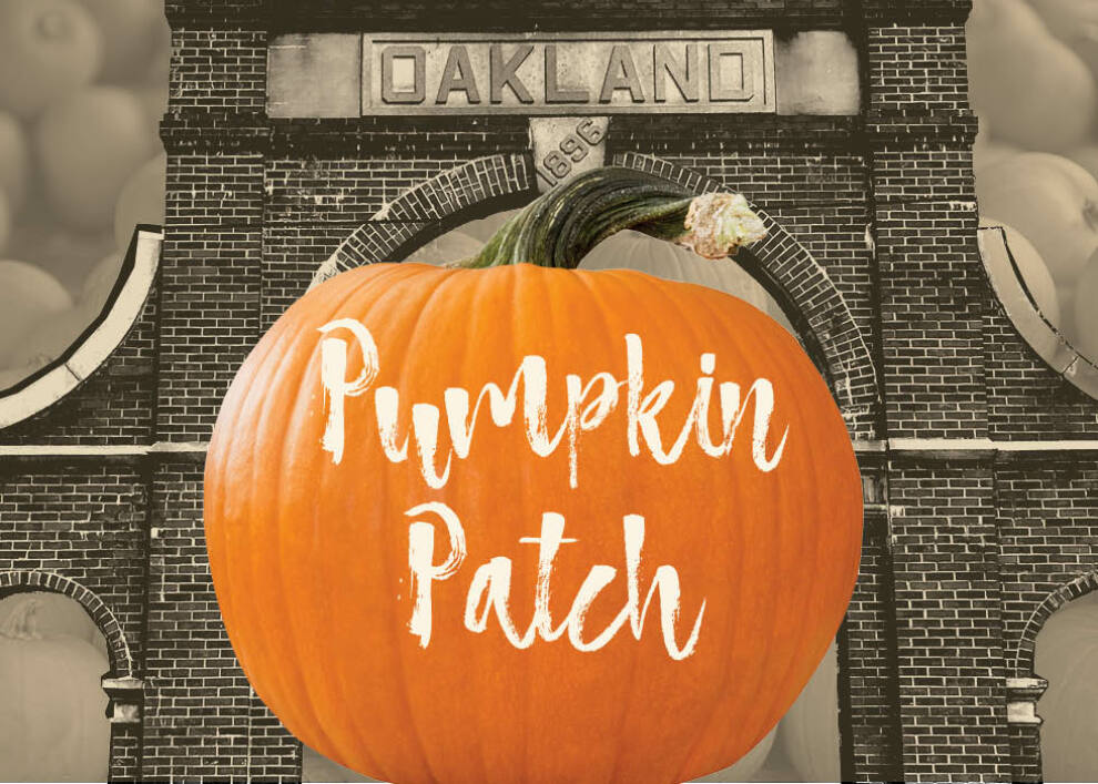Pumpkin Sale Feature Image