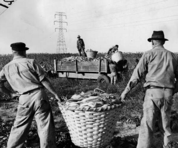 NO CHAIN GANG: During its heyday, inmates at the Prison Farm would harvest all manner of produce. PHOTO CREDIT: AJC Photographic archive